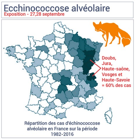 cas d'Echinococcose en France