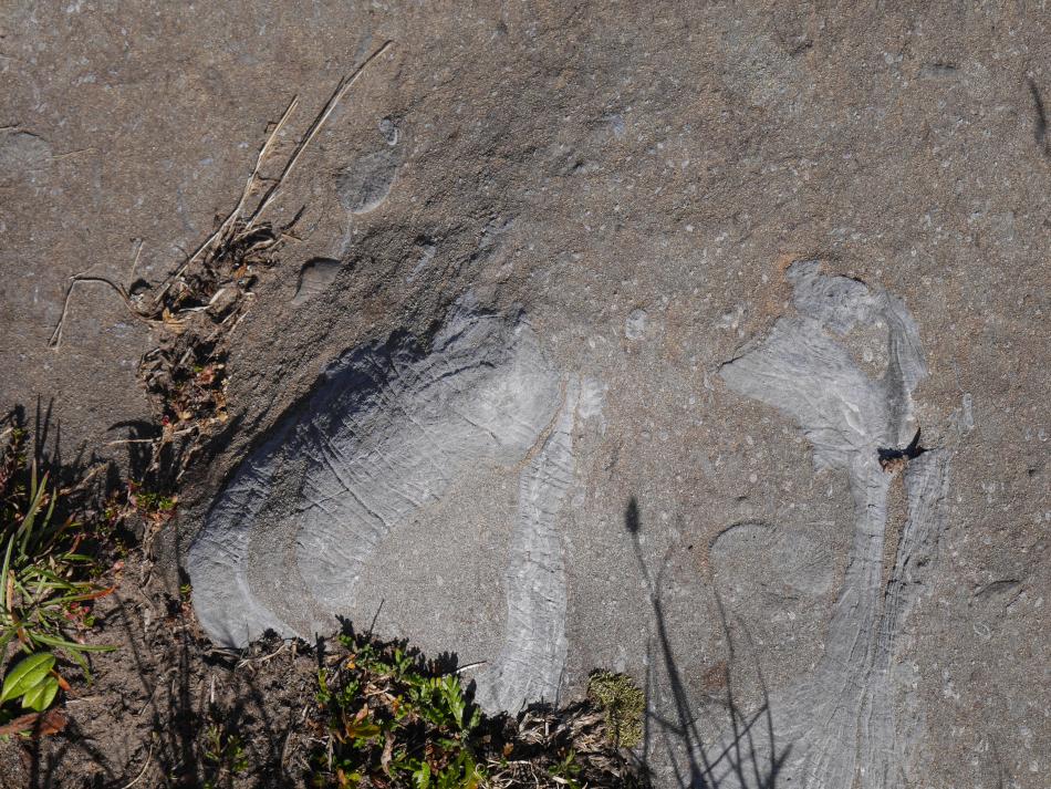 fossiles désert de platé