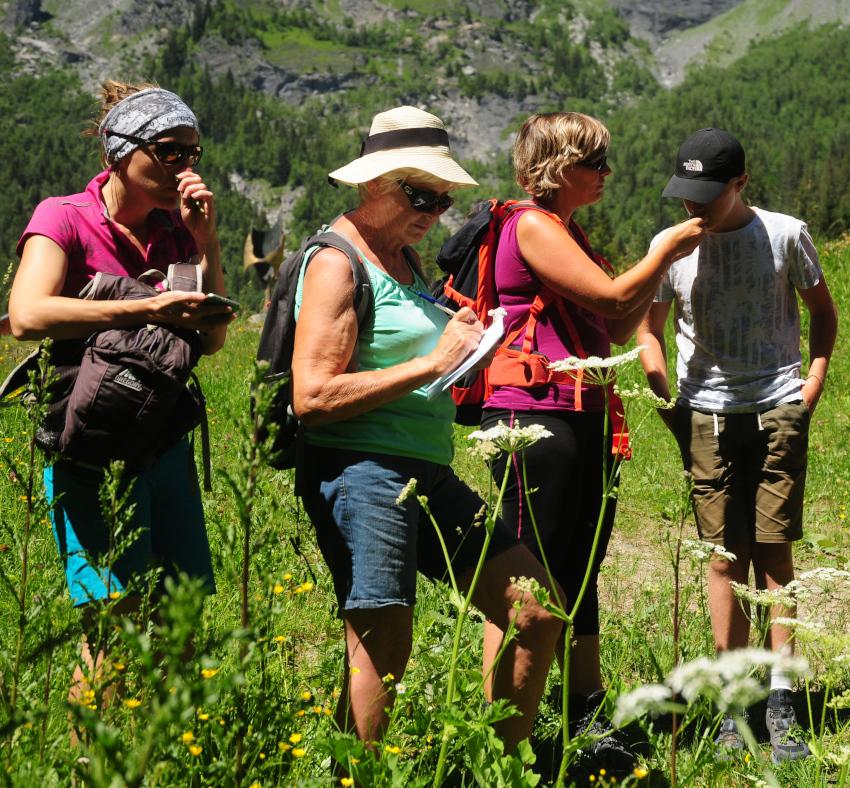 découverte plantes montagne